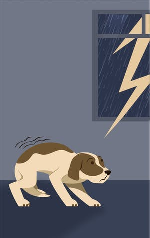 Storms and fireworks: Soothing your animal's fears