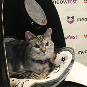 Everything's cat-fabulous at meowfest