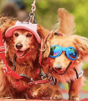 Woofstock 2019 – the year's gone by so fast!