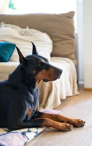 Cinq films de chiens à écouter durant la période des Fêtes