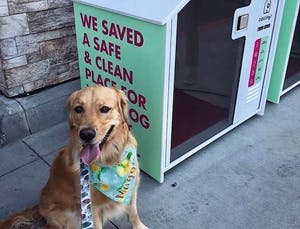 "The ""sidewalk sanctuaries"" transforming city living with your dog"
