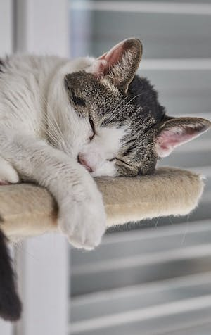 Picking the best cat tree for your pet