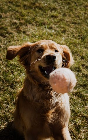Challenges to help boost fun time with your furry friends!