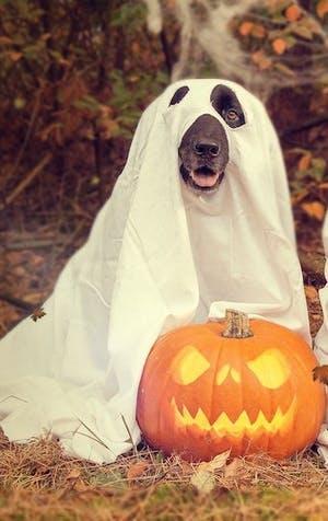 Quatre idées de costumes d'Halloween pour poilus