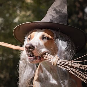 Halloween DIY: Costumes to make your dog proud