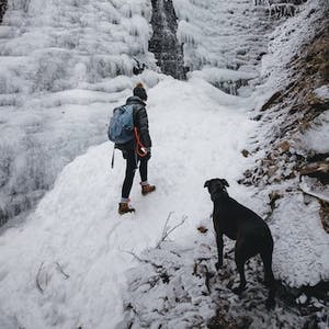 8 winter activities to share with your dog