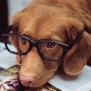 3 key facts about canine intelligence