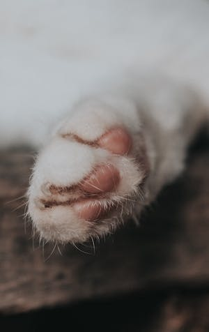 Those sharp kitty claws: how to avoid damage