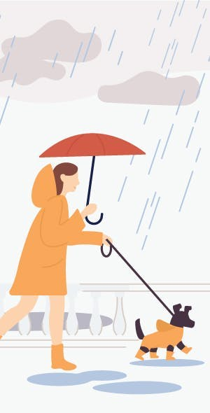 Your survival kit for walking in the rain with your dog