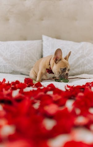 Valentine's Day is for dogs too!