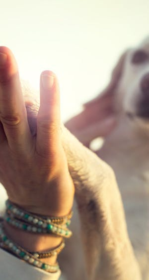 Caring for your geriatric dog: 6 pointers
