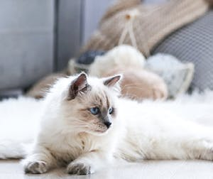 Tips to make your mini apartment a happy home for your cat