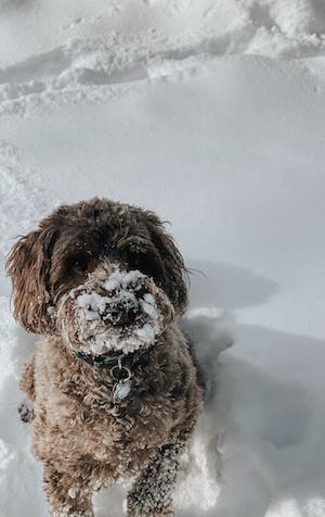 Snow, dangerous for dogs?
