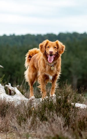 Country walks: watch out for dangers your dog may face