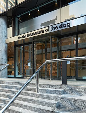 Celebrate your 4-legged soulmate at New York's Museum of the Dog