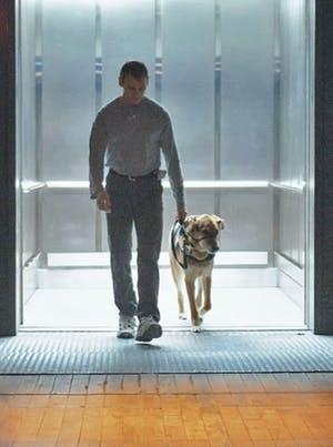 Therapeutic dog