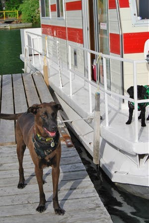 A Houseboating Holiday – with Your Dog as Guest of Honour