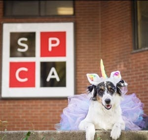 Eager to help? Become an SPCA volunteer!