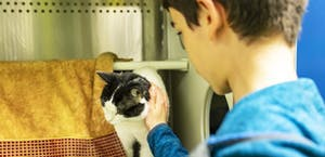 Developing empathy by caring for shelter animals