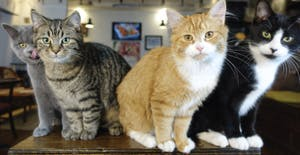 "CAT CAFÉ ""CHAT L'HEUREUX"" IN MONTREAL"
