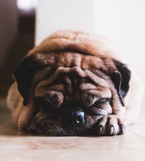 COVID-19: Will your animal be safe in an emergency?