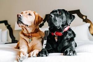 Canine ambassadors