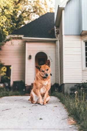 House (and pet) swapping: A great vacation option!