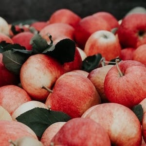 Quebec orchards where you (and your pooch!) can still pick apples