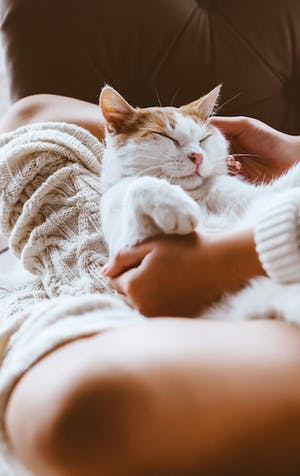 Calling all cat lovers: adopting a pet in the time of coronavirus