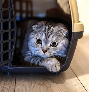 Tips to help your cat with cage and transport anxieties