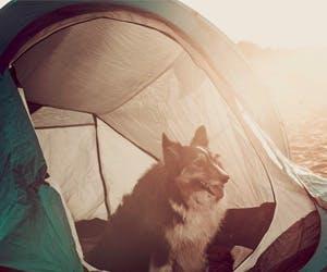 Nos bibittes à poil et le camping