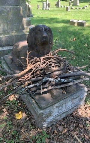 Rex: an unforgettable dog