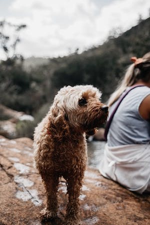 Get away from the city with your dog