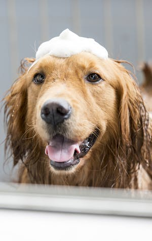 How to wash your dog: Tips and tricks