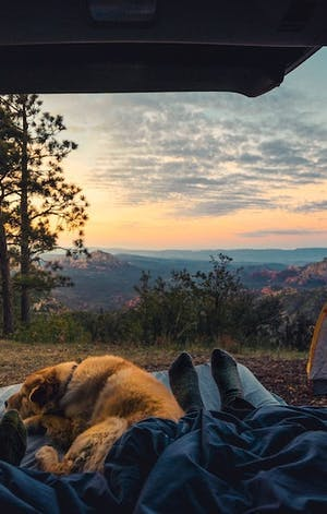 4 tips for happy camping with your dog