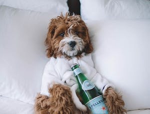 A luxury dog hotel