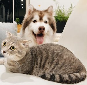 Dr. Scott: Pets of people with COVID-19: what to do if the owner can't care for them?