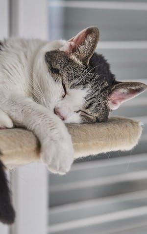 Dénicher le meilleur arbre à chat pour minou