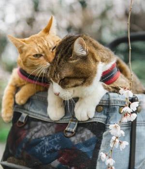 Japan, a cat paradise