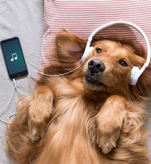 A playlist for your animal!