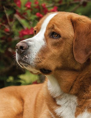 This dog gives victims the courage to speak