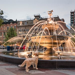 Berczy Park in Toronto: Celebrating dogs!