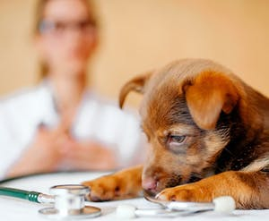 Veterinary services included in Quebec's listing of priority activities and services