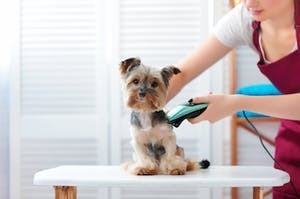 COVID-19: Pet groomers given the green light to open