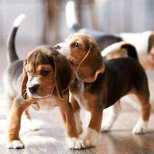 Why it's important to socialize your puppy