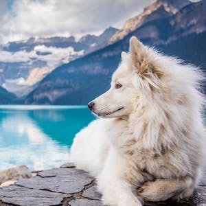 Canada's top 7 most beautiful dog-friendly locations