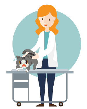Tips to help reduce my cat's stress at the veterinary clinic