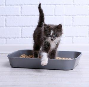De nouvelles litières pour le chat des temps modernes
