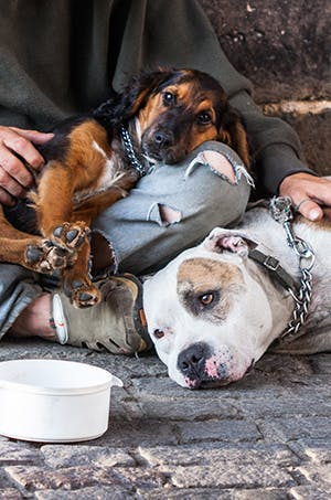 Are homeless companion dogs unhappy?