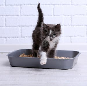 Alternative cat litters for the modern kitty